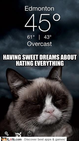grumpy-cat-weather-app-2
