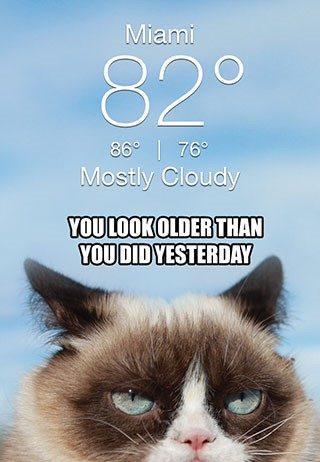 grumpy-cat-weather-app