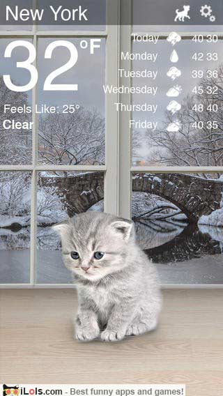 weather-kitty-app-2